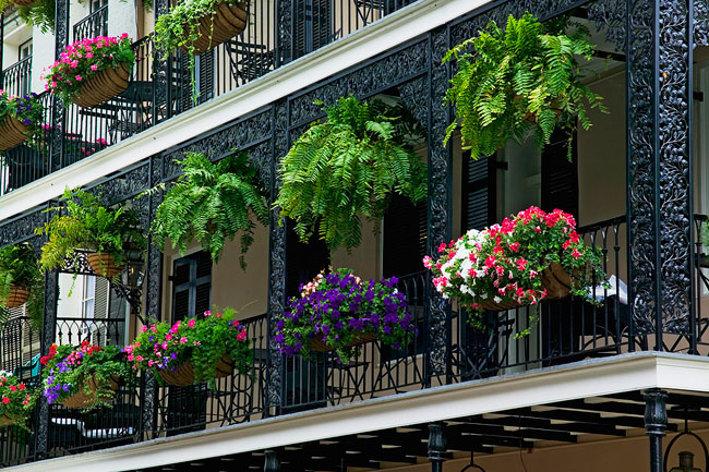 Piante da terrazzo for Piante sempreverdi da balcone