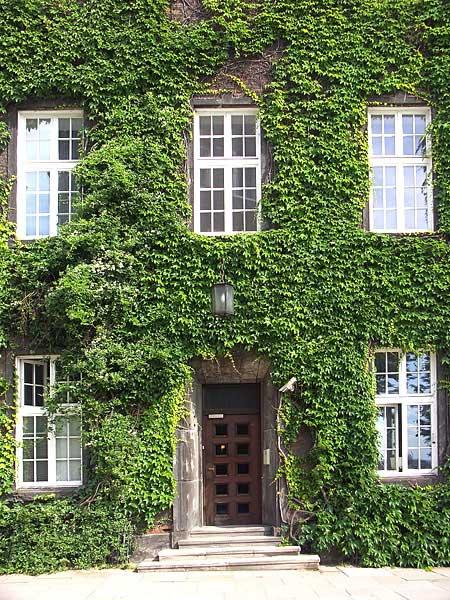 Piante da terrazzo rampicanti idea creativa della casa e for Piante da terrazzo sempreverdi