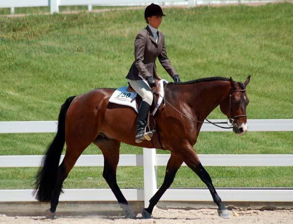 pretty nice b29bf a8618 Abbigliamento equitazione