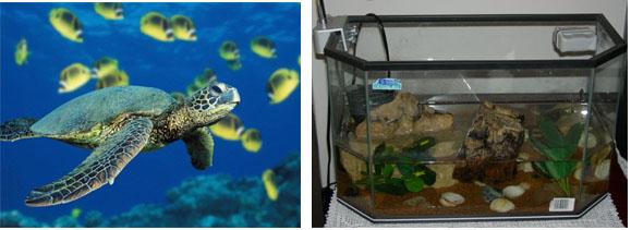Acquario per tartarughe for Vasca per tartarughe grandi