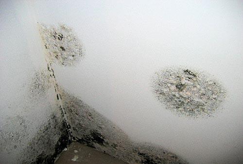 Muffa nei muri come eliminarla for Eliminare la muffa