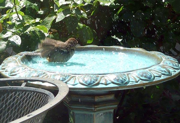 Vasca per uccelli for Laghetti ornamentali